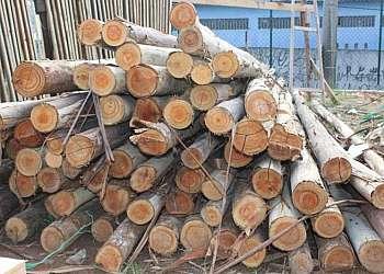 Ponta rotativa para madeira